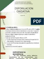 Eq.3 Fosforilacion Oxidativa 2