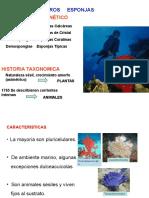 Esponjas-Poríferos-2.ppt