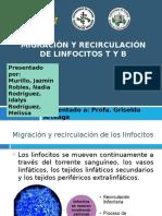 Migración y Recirculaciónde Linfocitos T y B