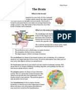 fact sheet exemplar