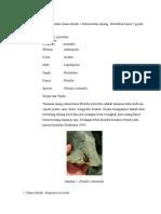 DPT Lapbes 5.1 Revisi