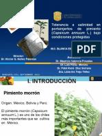 2. Portainjertos de Pimiento a Salinidad en Agricultura Protegida