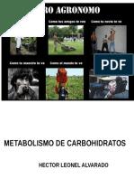 HLA Metabolismo de Carbohidratos