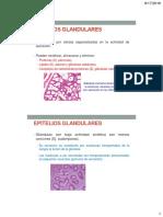 Histología de glándulas 2016-2.pdf