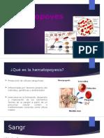 Hematopoyesis