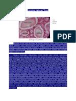 143258485-Histologi-Kelenjar-Tiroid.docx