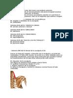 Sistemas neuromusculares del tronco secundario posterior.docx