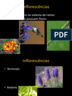 Flores e Inflorescencias 2