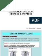 Lesão e Morte Celular