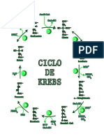 Ciclo de Krebs y La Glucolisis