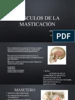 Músculos de La Masticación y Ligamentos