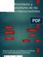 5 Biosíntesis-y-metabolismo-de-los-desoxirribonucleótidos.pptx