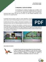 Guia de Entrenamiento Pokemon Xy Profesional