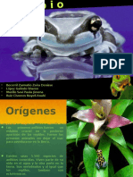 Características de los Anfibios parte 1