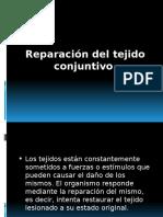 reparacion tejido conjuntivo