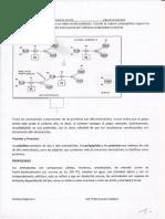 Aminoacidos5
