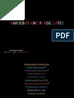Parasitology Lab 1.01 Intestinal Amoebas