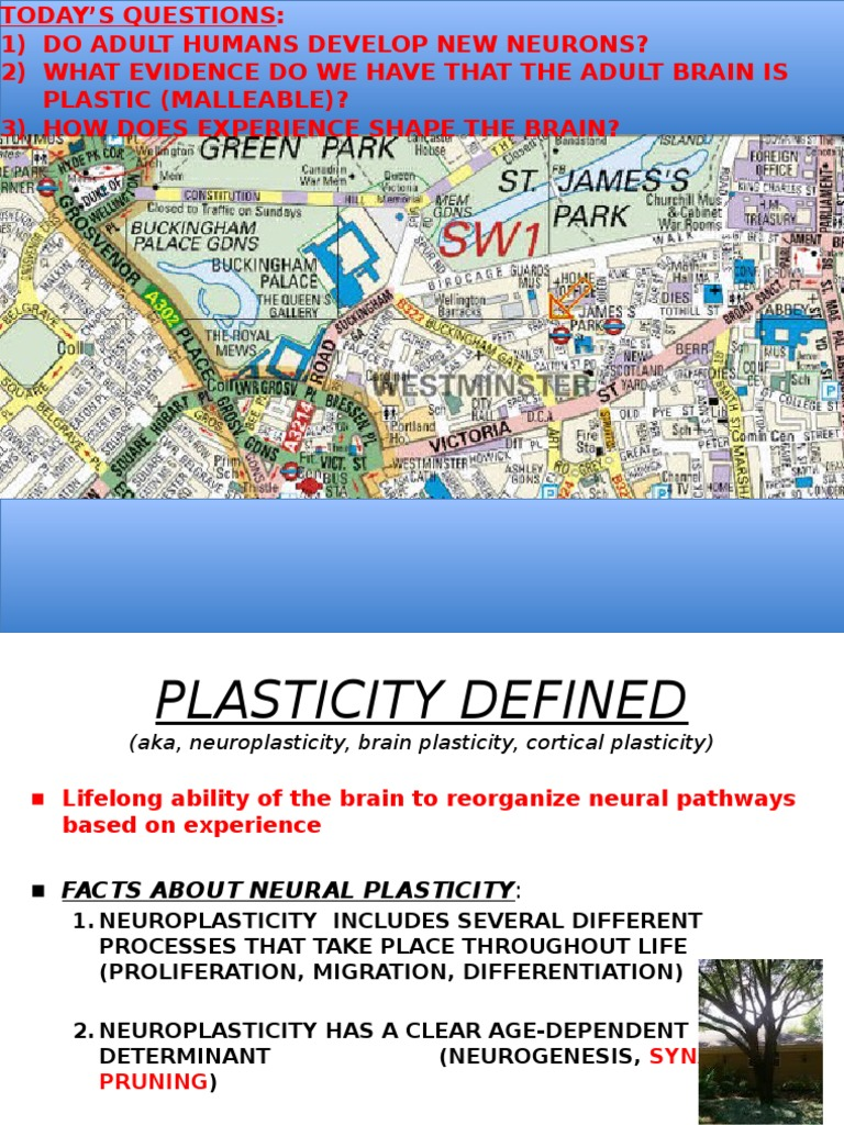 5 the effect of experience plasticity ppt