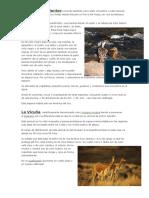 Animales en extincion Pato Cortacorrientes