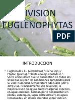 195253213-EUGLENOFITAS.pdf