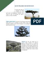 ANIMALES Y PLANTAS EN PELIGRO DE EXTINCION.docx