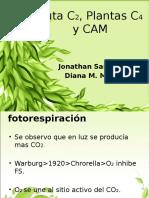 Clico C2, Plantas C4 y CAM