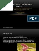 Salmonela Exp
