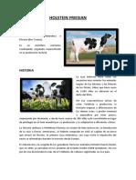 Holstein Friesian - Vet1