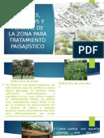 Plantas para tratamiento paisajista en la sierra de Perú