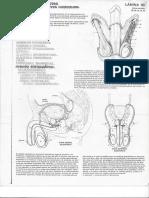 Anatomía y cromodinámica en Fernández
