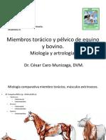 002-CC2014-Miologia y Artrologia Miembros Animales Mayores.