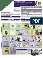 Plancton Humedales Bogota (microorganismos del agua) 2014