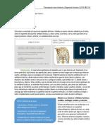 2016-07-26 Tórax Óseo.pdf