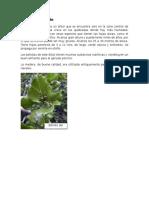 plantas_autoctonas
