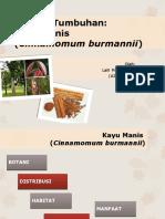 PPT Kayu Manis