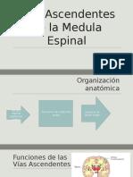 04-2Vías Ascendentes de La Medula Espinal