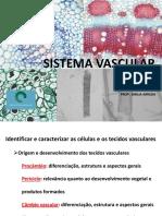 05.Sistema Vascular