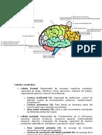 Mapa-Cerebral.docx