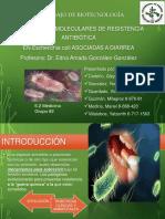 5. Mecanismos moleculares de resistencia antibiótica.pdf