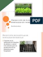 Germinacion de Plantula