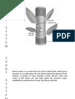 Shoot System - Stem, Leaf.pdf