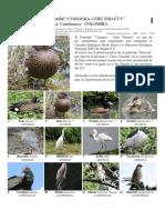Bogota, Colombia - Aves Del Humedal Conejera