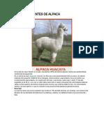 RAZAS EXISTENTES DE ALPACA.docx