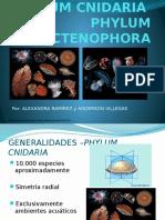 Cnidaria y Ctenoforos