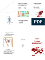 Triptico Las Células Sanguíneas
