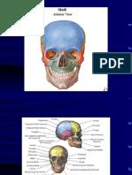 Cerebro Anatomia