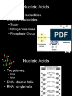 nucleic acids and carbohydrates