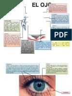 Ojo Anatomia