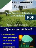 Malezas de La Zona Norte y Atlántica Guatemala