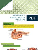 Anatomia y Fisiologia de Pancreasan
